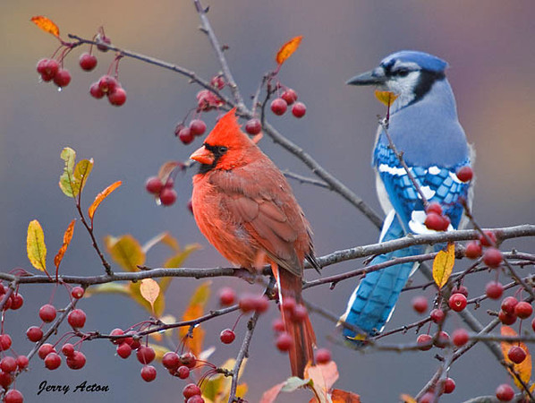 Game Threat Which Birds Are Going To Take Flight Blue Jays 5 14
